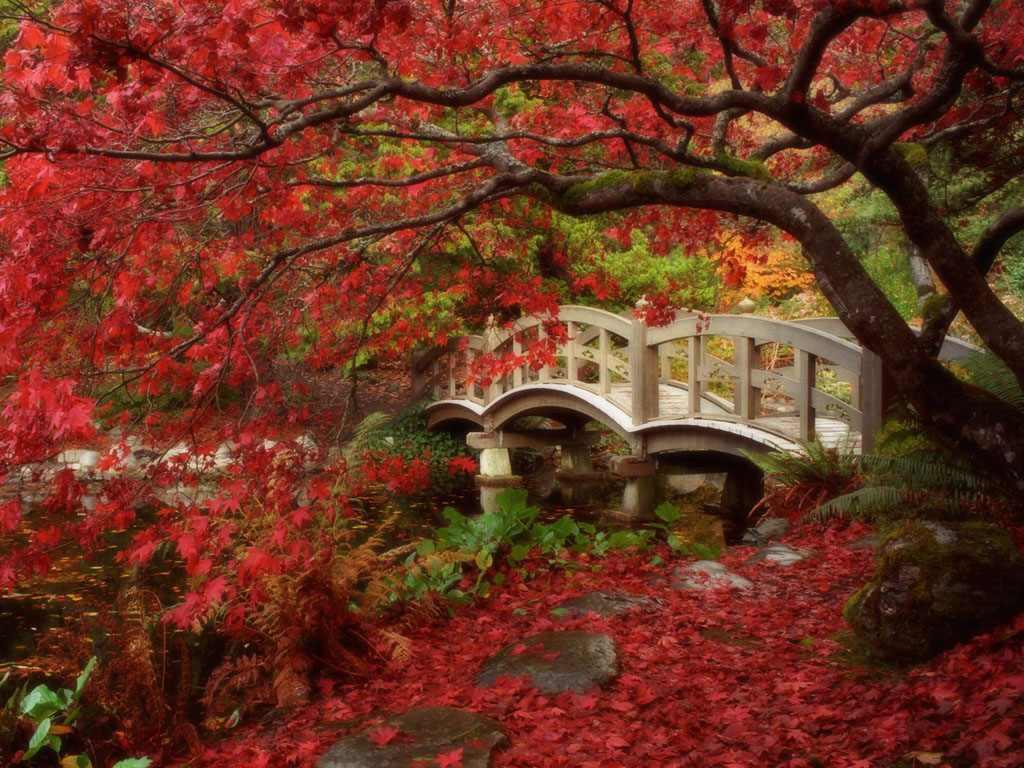 Japan Garden Flowers: Flowers In God's Garden