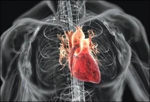 Human-Heart-300x204 (1)